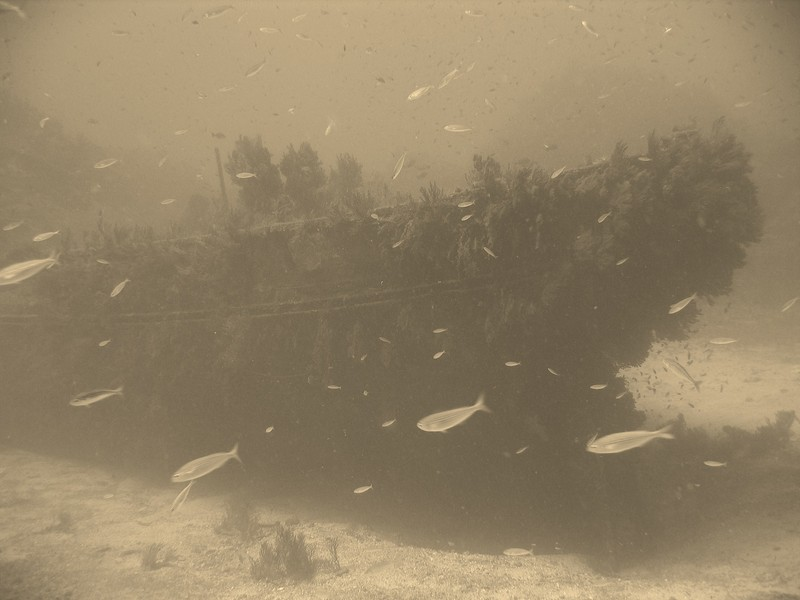Epave de l'Arroyo Baie des Sablettes Var France wreck in france diving in azur cost