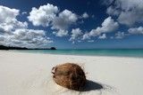Dream beach coconut on white sand Lifou Loyalty Islands New Caledonia