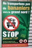 Banana bunchy top virus New Caledonia Nouvelle-Calédonie avertissement Bananier grand nord