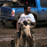 Toughbull fashion horse riding New Caledonia