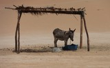 Donkey In the Abu Dhabi Desert