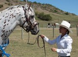 Apaloosa horse stalion and his beautiful cowgirl